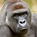 Profile picture of Dicksout4Harambe