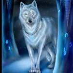 Profile photo of Silverfang