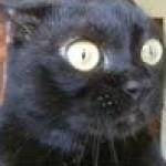 Profile picture of Upstartgoblin