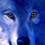 Profile photo of SapphireWolf