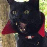 Strahd Cat
